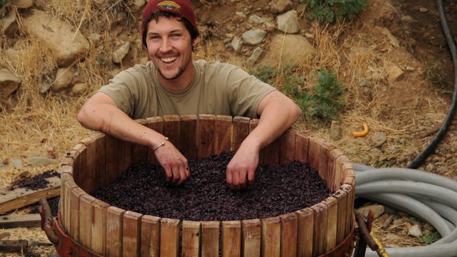 Бочка с виноградом.