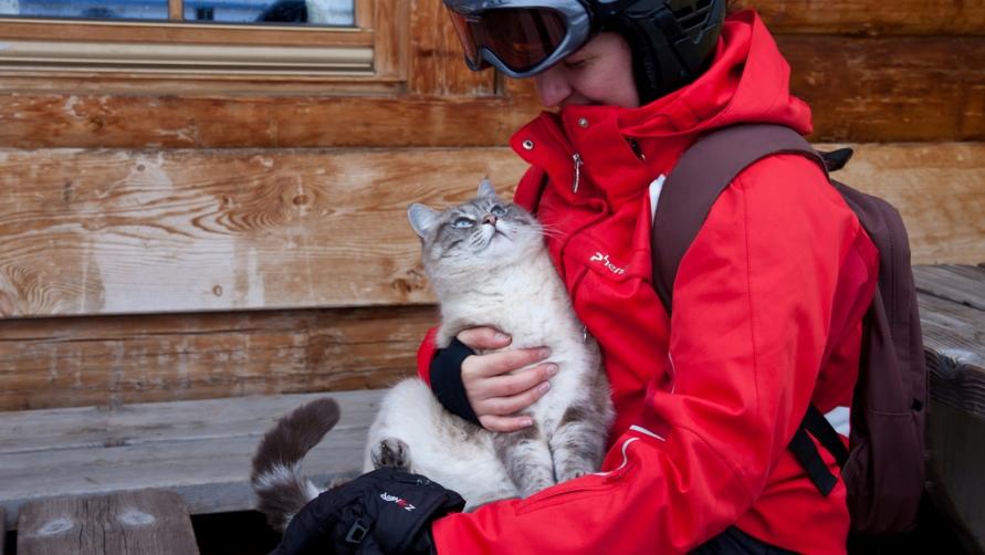 Котик на руках.