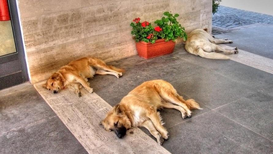 Собаки спят на улице