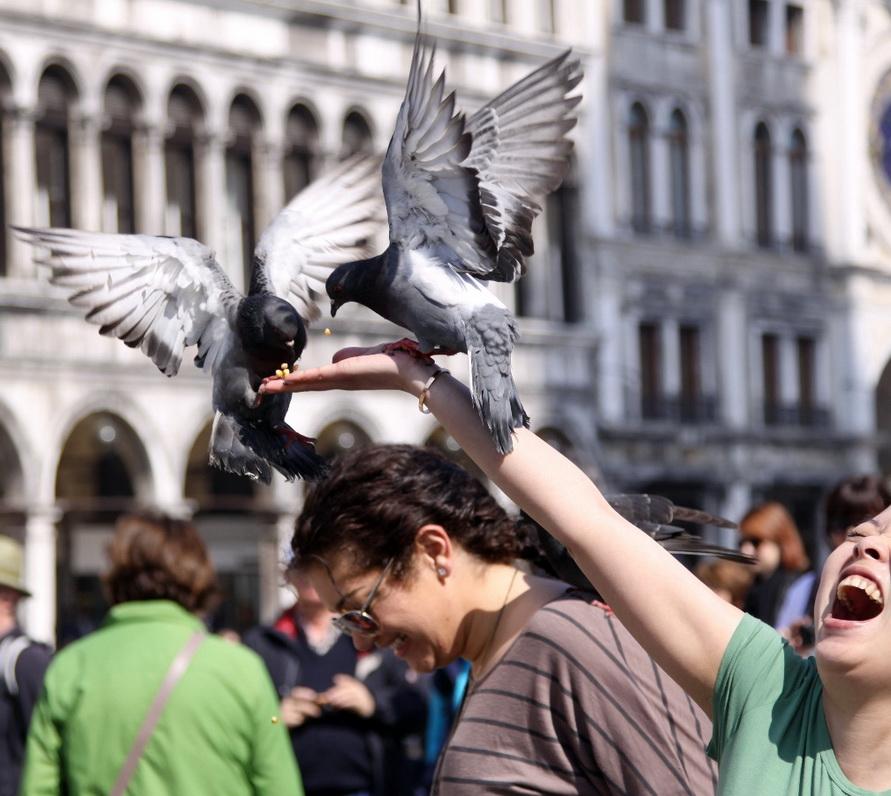 Кормить голубей в Венеции нельзя.