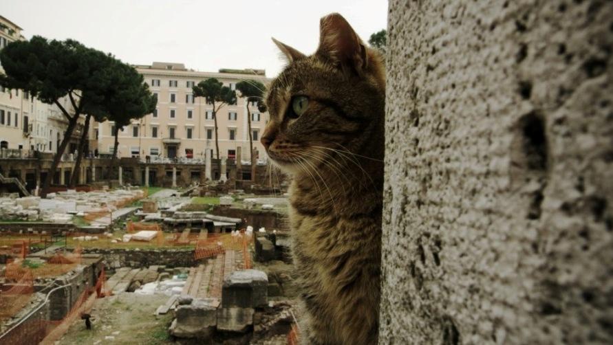 Кот в Торре Арджентино