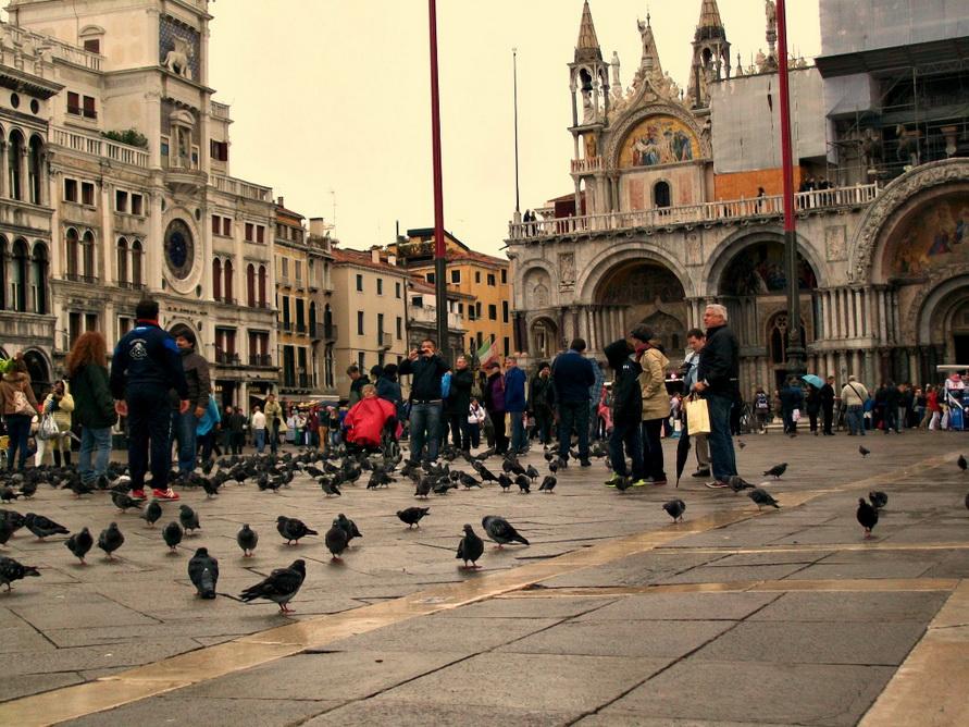 Голуби на площади.