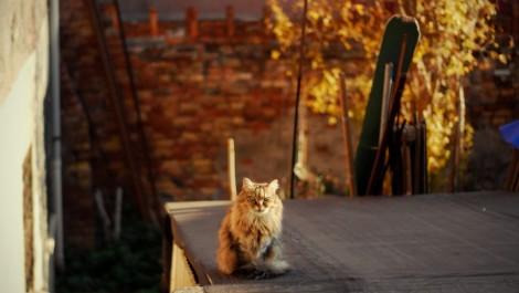 Золотая осень в Италии