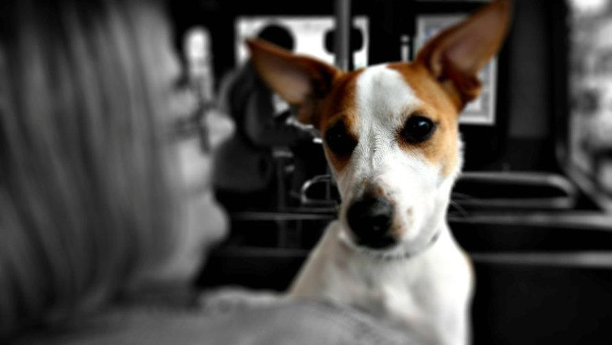 Собачка в автобусе